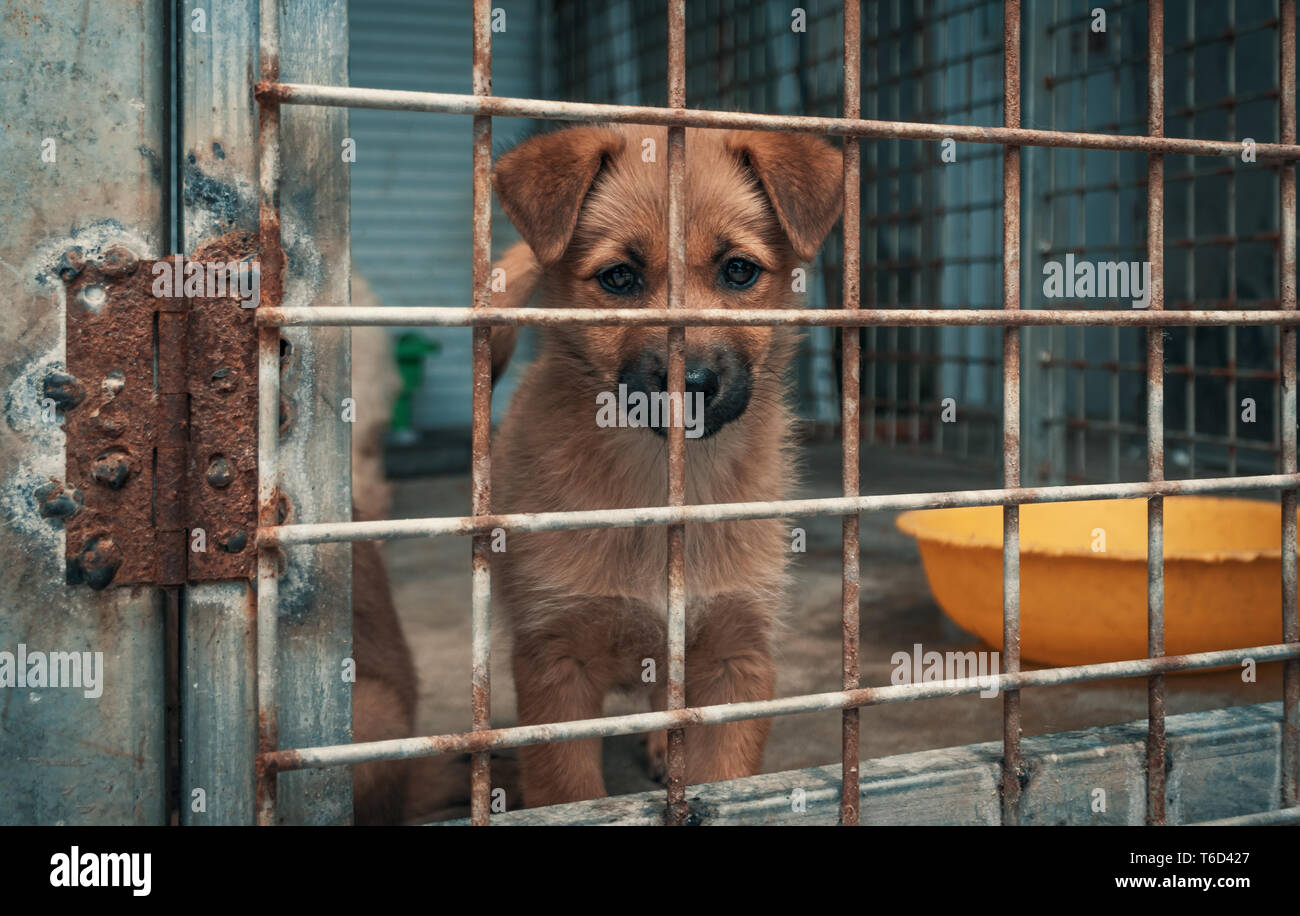 Sad puppy in shelter behind fence waiting to be rescued and adopted to new home. Shelter for animals concept - Stock Image
