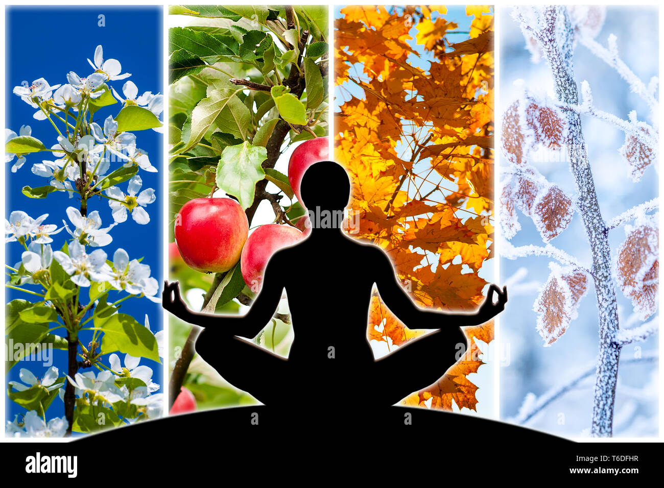Female yoga figure silhouette against collage of four pictures representing each season: spring, summer, autumn and winter. - Stock Image