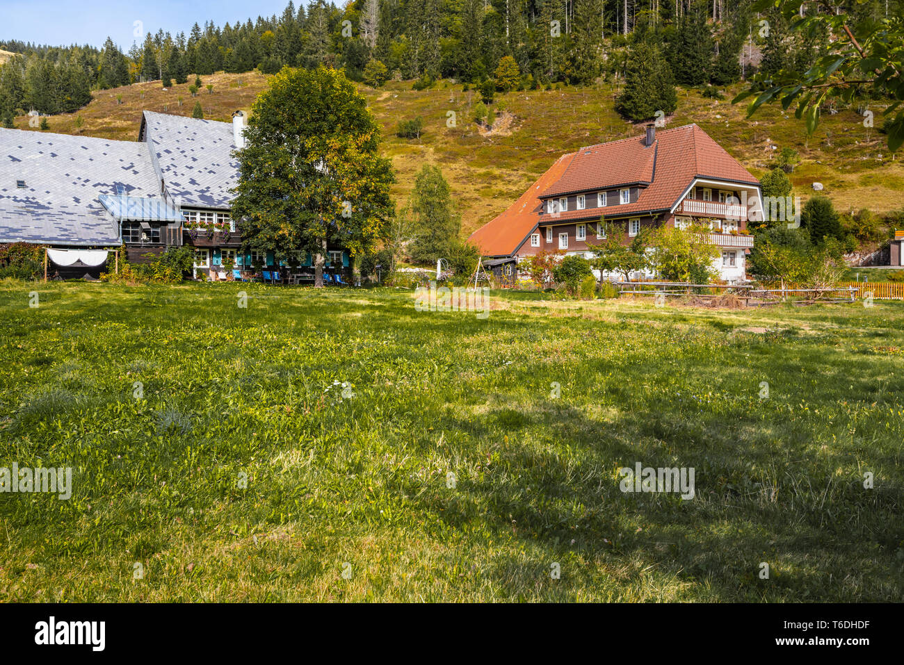 Black Forest houses and wooded hills in Menzenschwand, Black Forest, Germany, farm building with adjoining living area, borough of St. Blasien - Stock Image