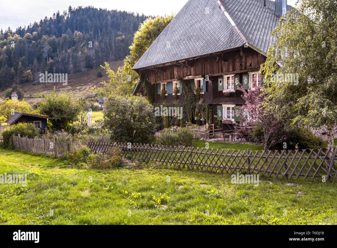 typical Black Forest house with hipped roof and wooded hills, village Menzenschwand, Germany, original architecture of the High Black Forest Stock Photo