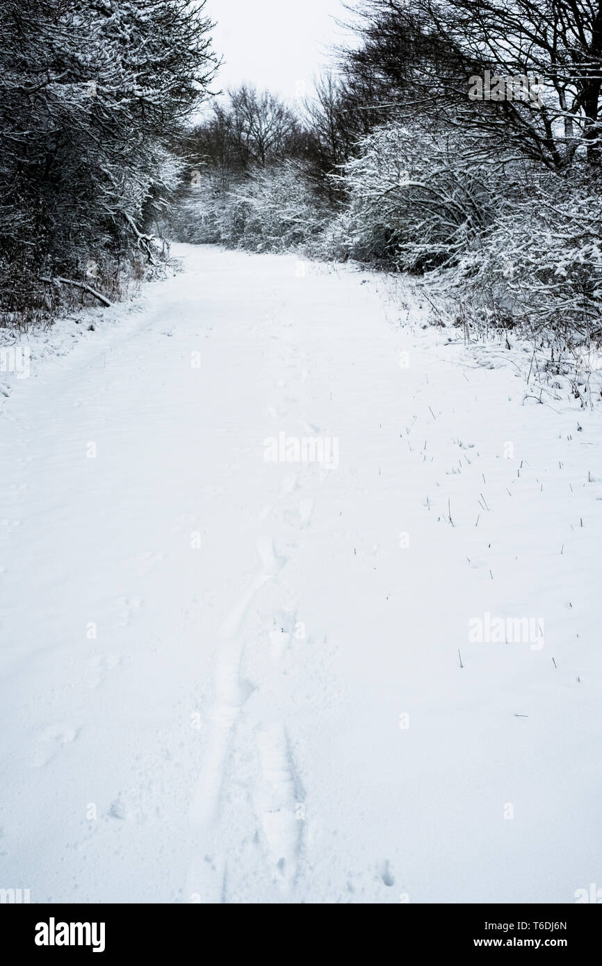 High angle view of animal tracks in the snow on a rural road. - Stock Image