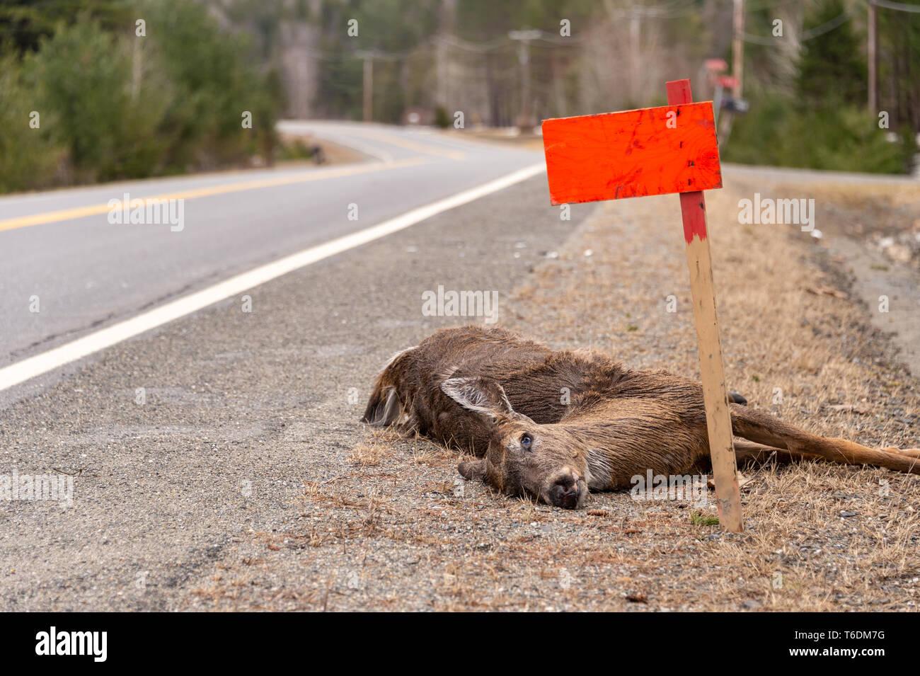 Dead Body Car Crash Stock Photos & Dead Body Car Crash Stock