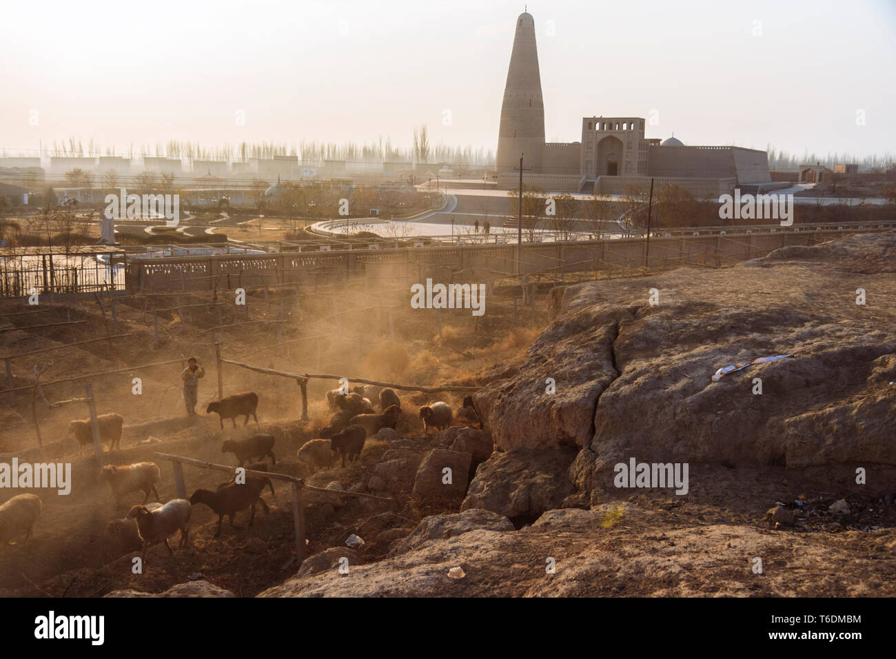 Turpan, Xinjiang, China : Shepherds take a flock of sheep at sunset, past the 18th century Emin Minaret mosque. At 44 meters (144 ft) it is the talles - Stock Image