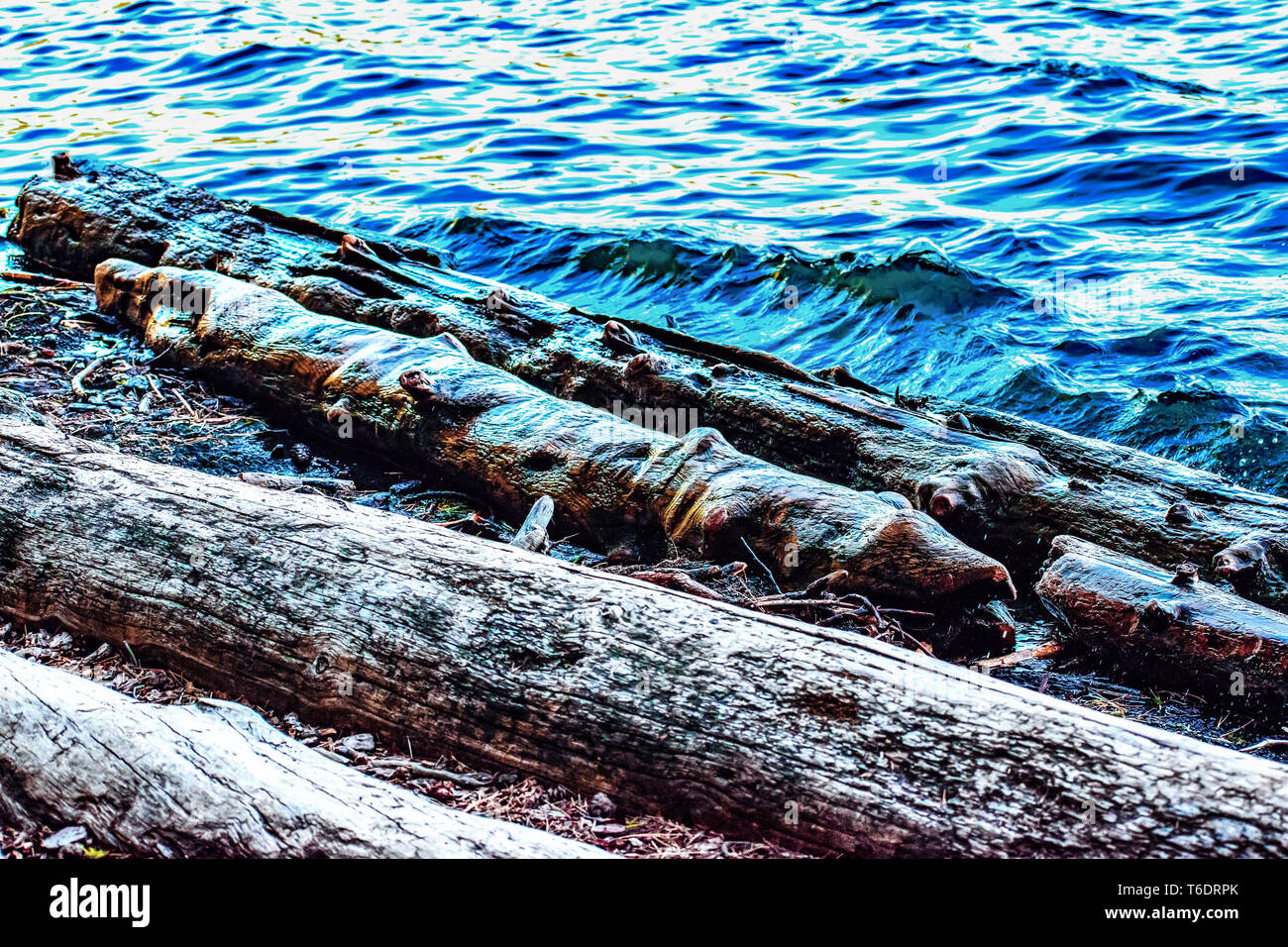 Beautiful Shoreline View of Wood and Water - The Downed and Drowned Logs (waves lapping timber) of the Heavily Forested Suttle Lake in Central Oregon - Stock Image