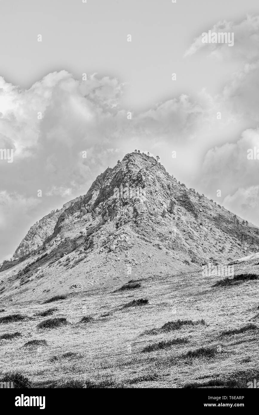 Mountain meadows with flowers and rock peak under sky with white fluffy clouds. Black and white. - Stock Image