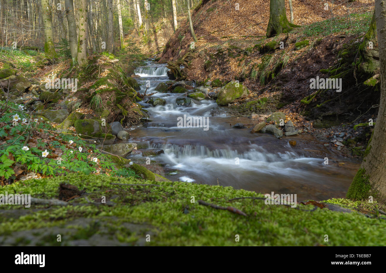 Little german canyon at the mountain Rhoen - Stock Image