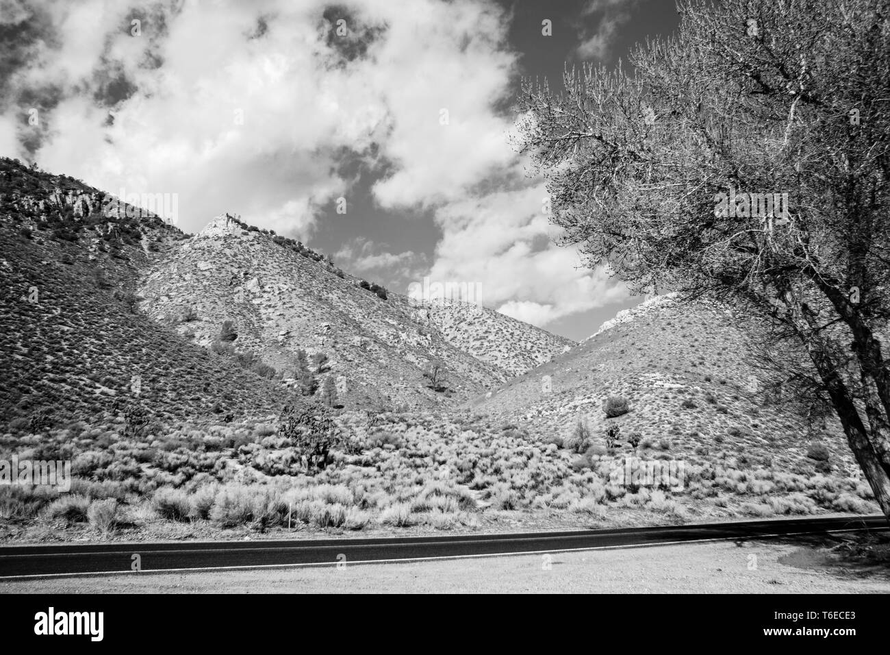 Black and white, mountains side with bushes, road and tree. Sky with white fluffy clouds. - Stock Image