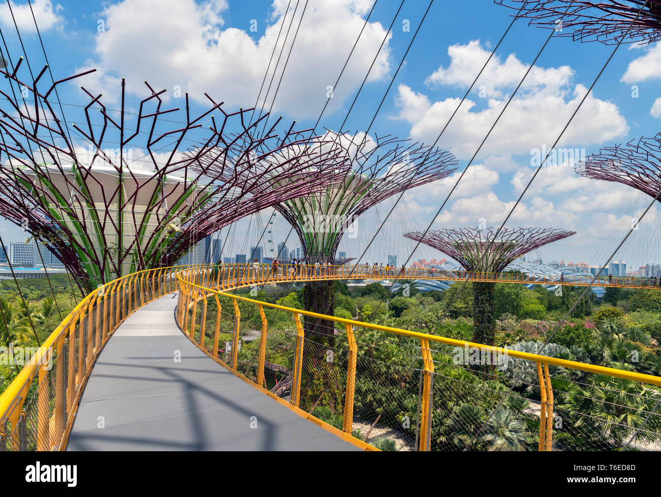 The OCBC Skyway, an aerial walkway in the Supertree Grove, Gardens by the Bay, Singapore City, Singapore Stock Photo