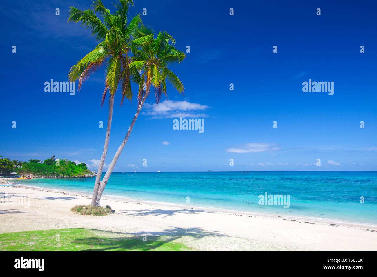 panoramic tropical beach with coconut palm - Stock Image