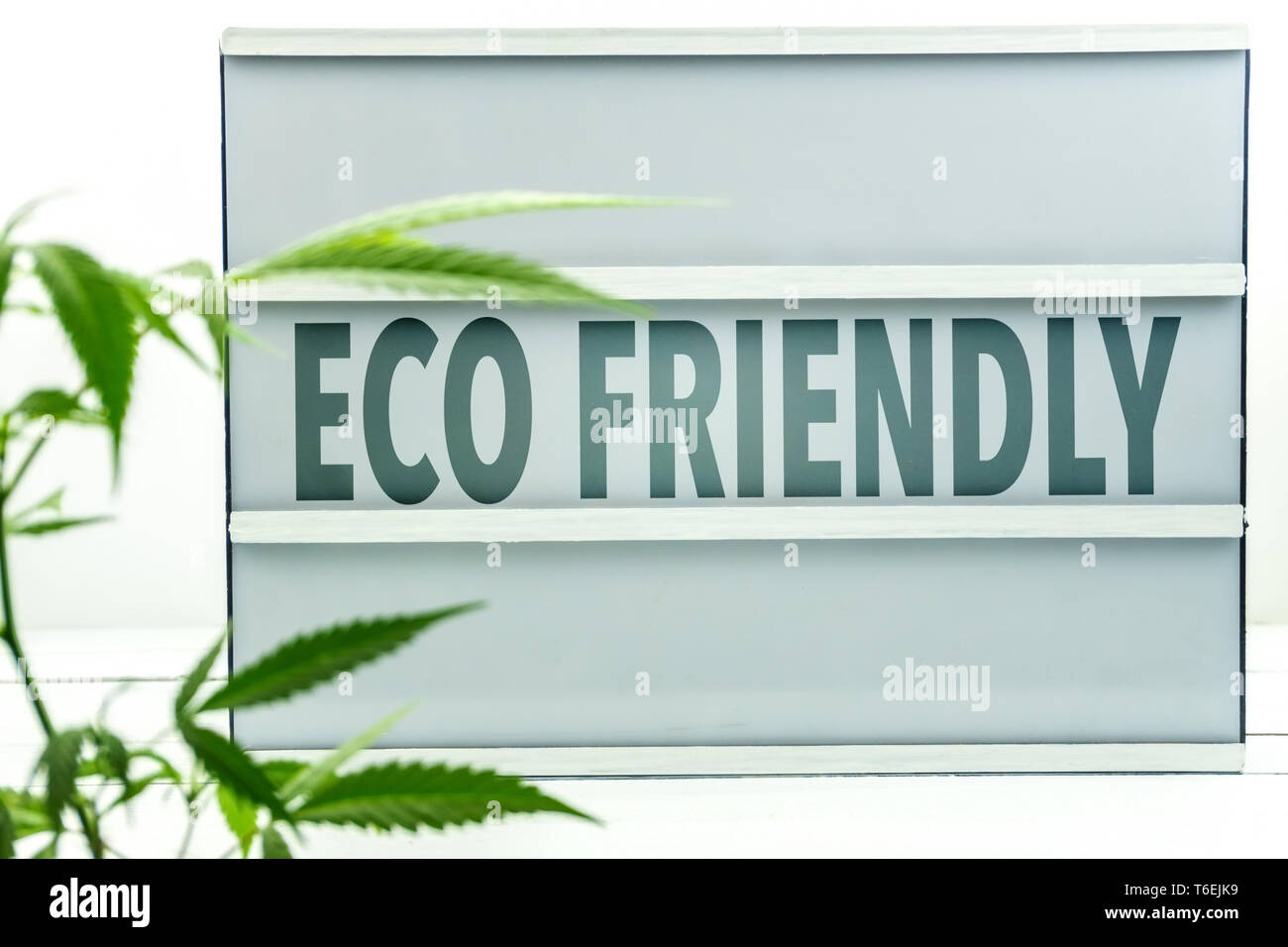 White light box with the word Eco Friendly and Cannabis plant in front - Stock Image