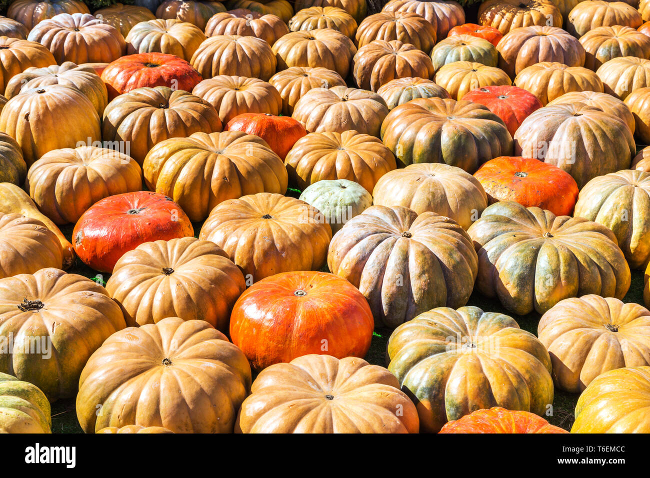 Background of round colorful pumpkins - Stock Image