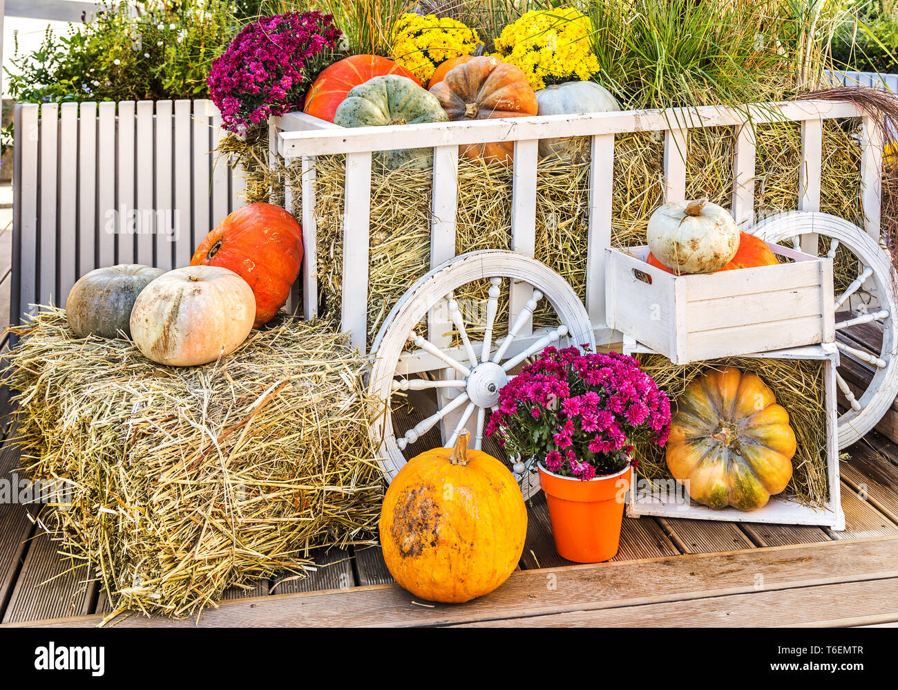 Pumpkins on market - Stock Image