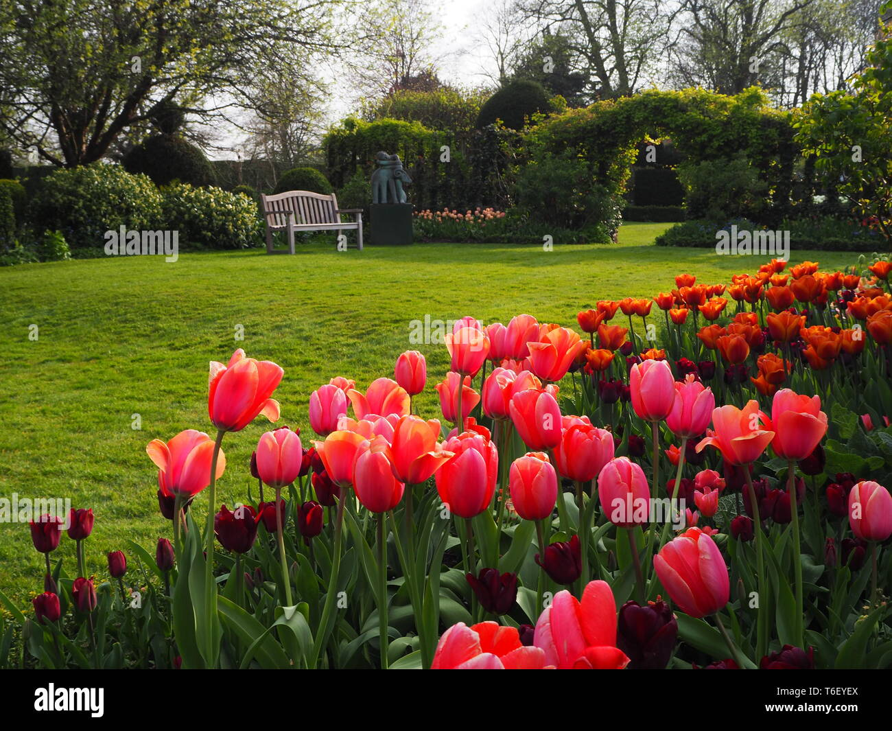 Chenies Manor Gardens in April view across the sunny lawn framed by colourful tulips and akebia archway and trellis; somehere to sit by the statue. - Stock Image
