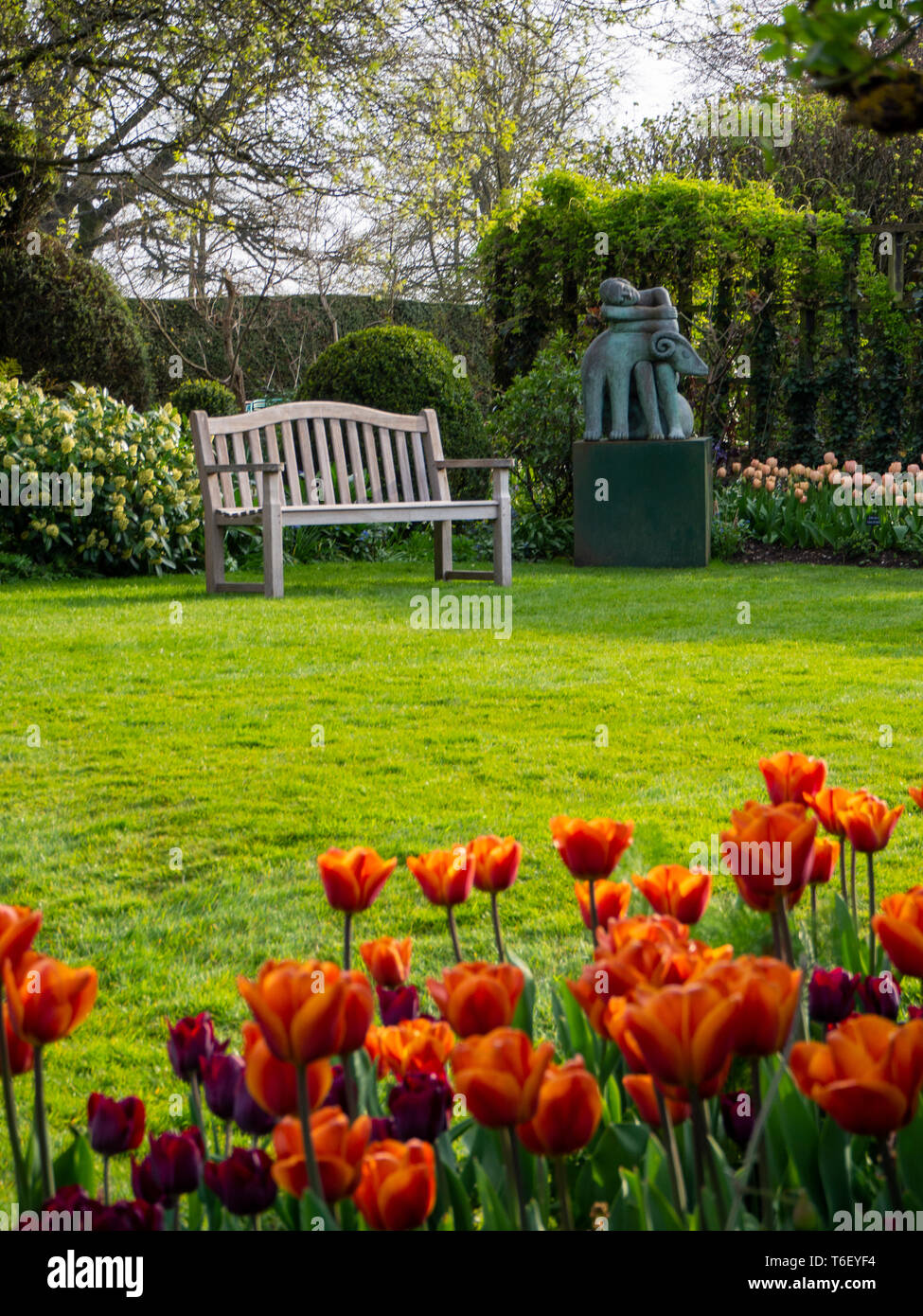 Chenies Manor Gardens in April, portrait view with Brown Sugar tulips in foreground; wooden bench seat and sleeping statue, trellis and sunny lawn. - Stock Image