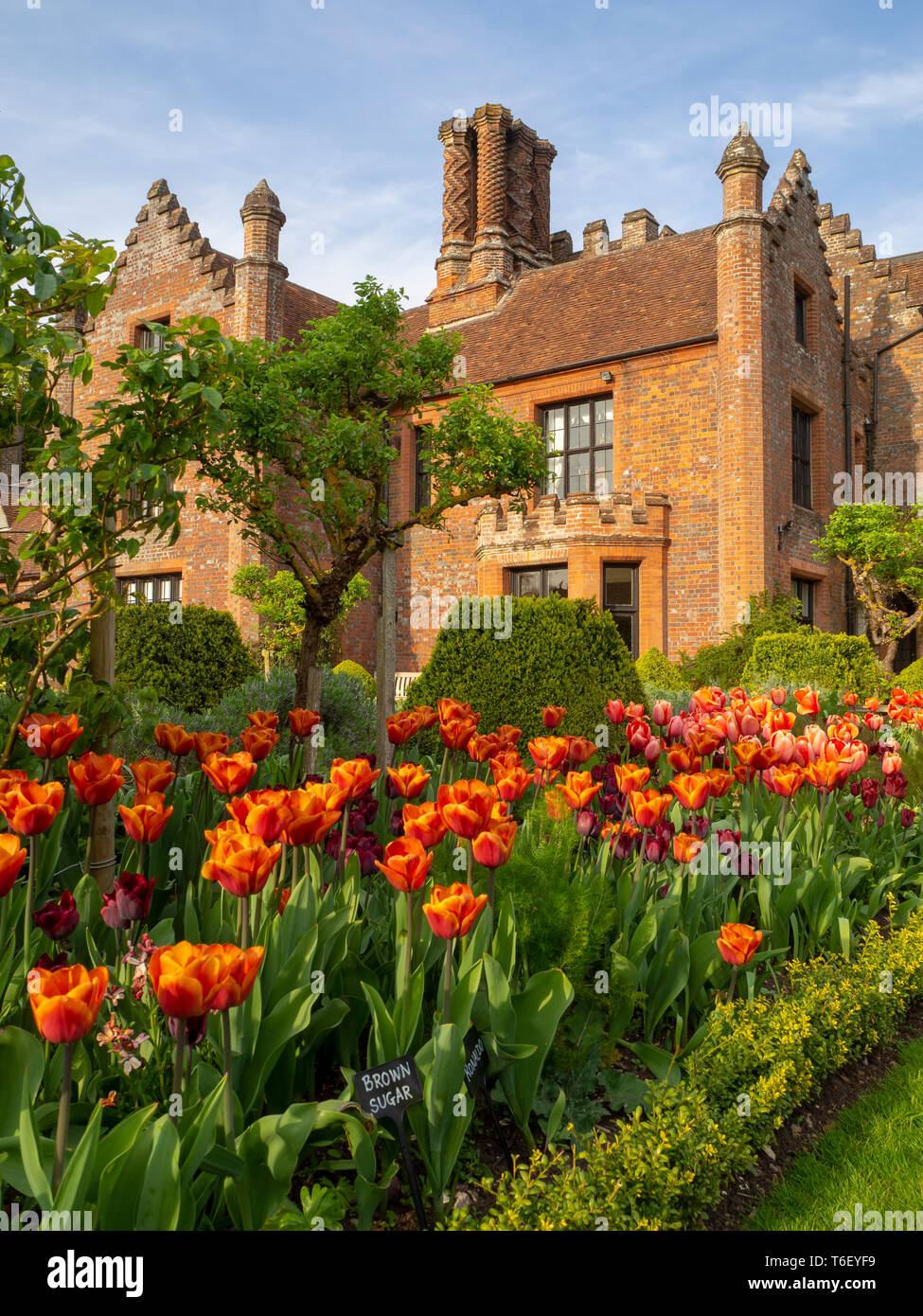 Chenies Manor House and Gardens in April showing colourful tulip borders. - Stock Image