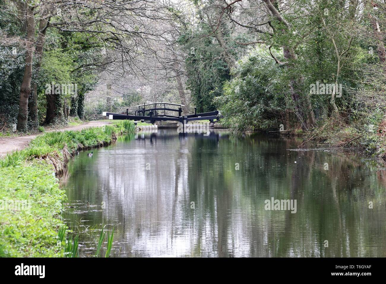 the basingstoke canal near Brookwood, Surrey - Stock Image