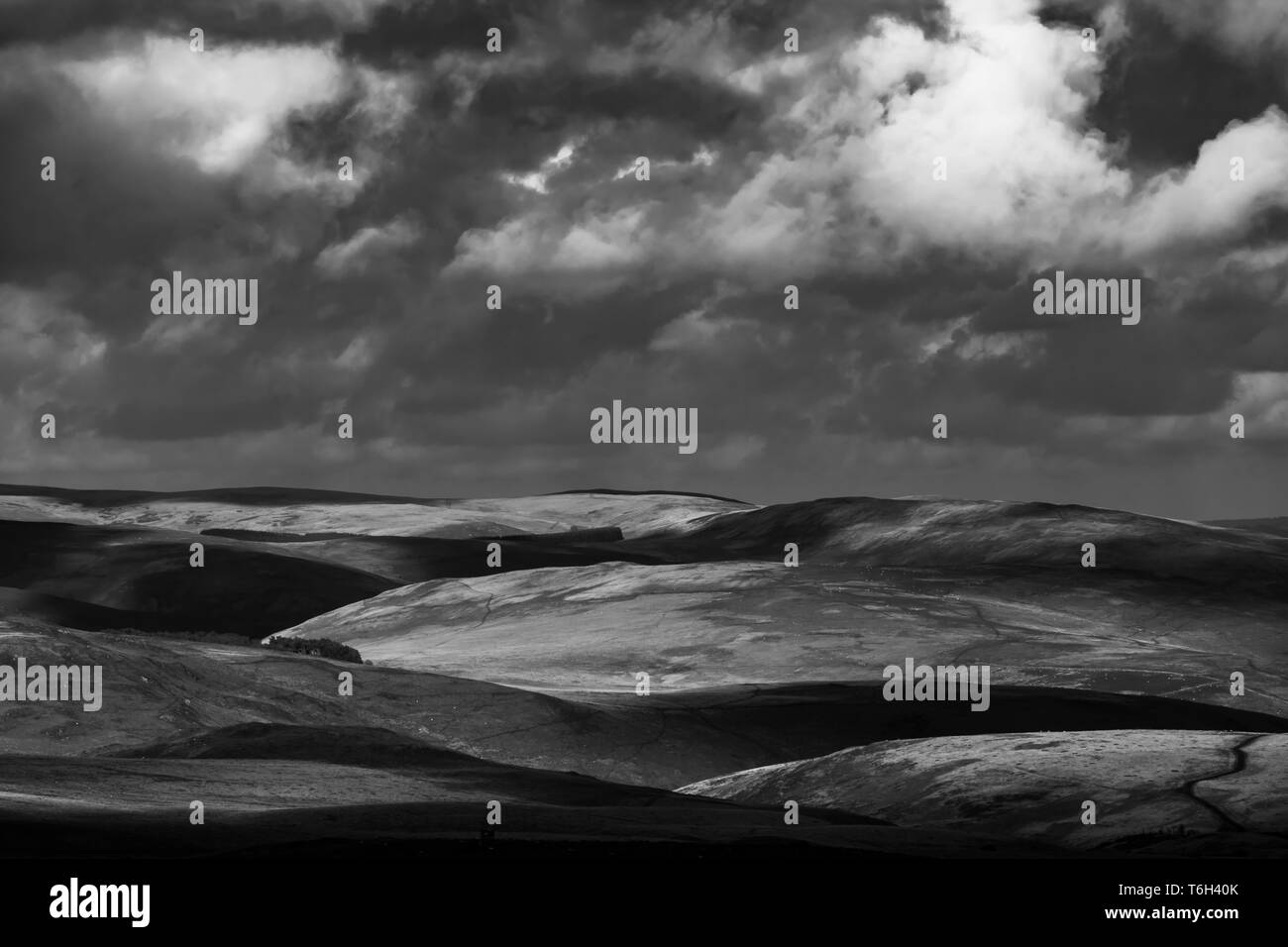 Curlew Black and White Stock Photos & Images - Alamy