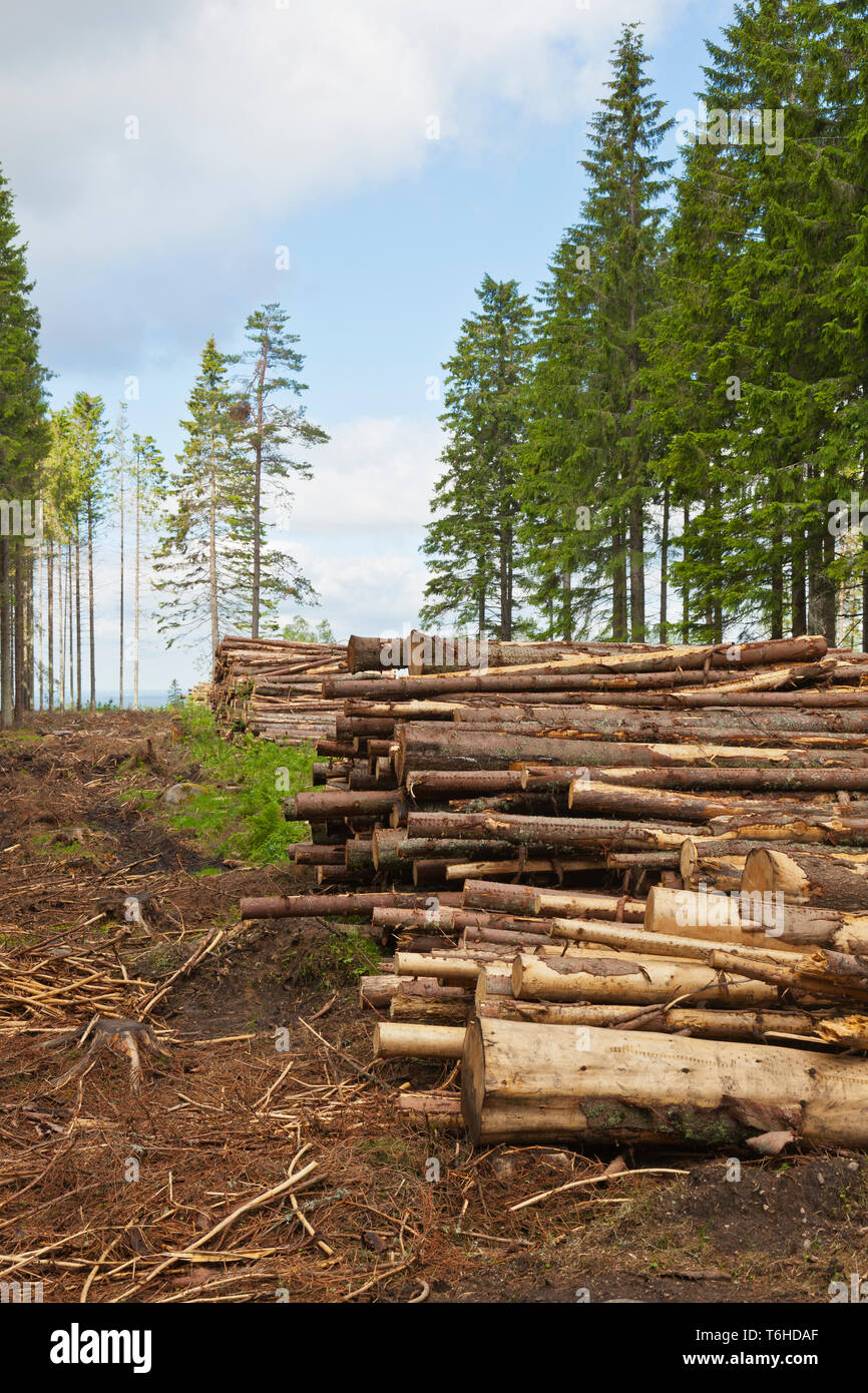Stacked timber on clearcutting area - Stock Image