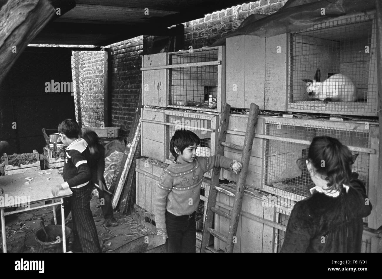 Spitalfields City Farm London E1, children caring for rabbits, 1978 - Stock Image