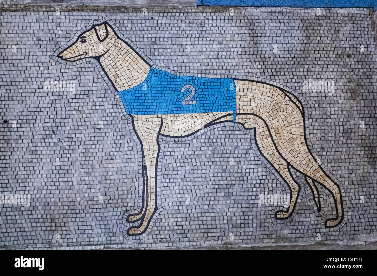 Greyhound puppy derby betting slips automated betting robots horse racing us