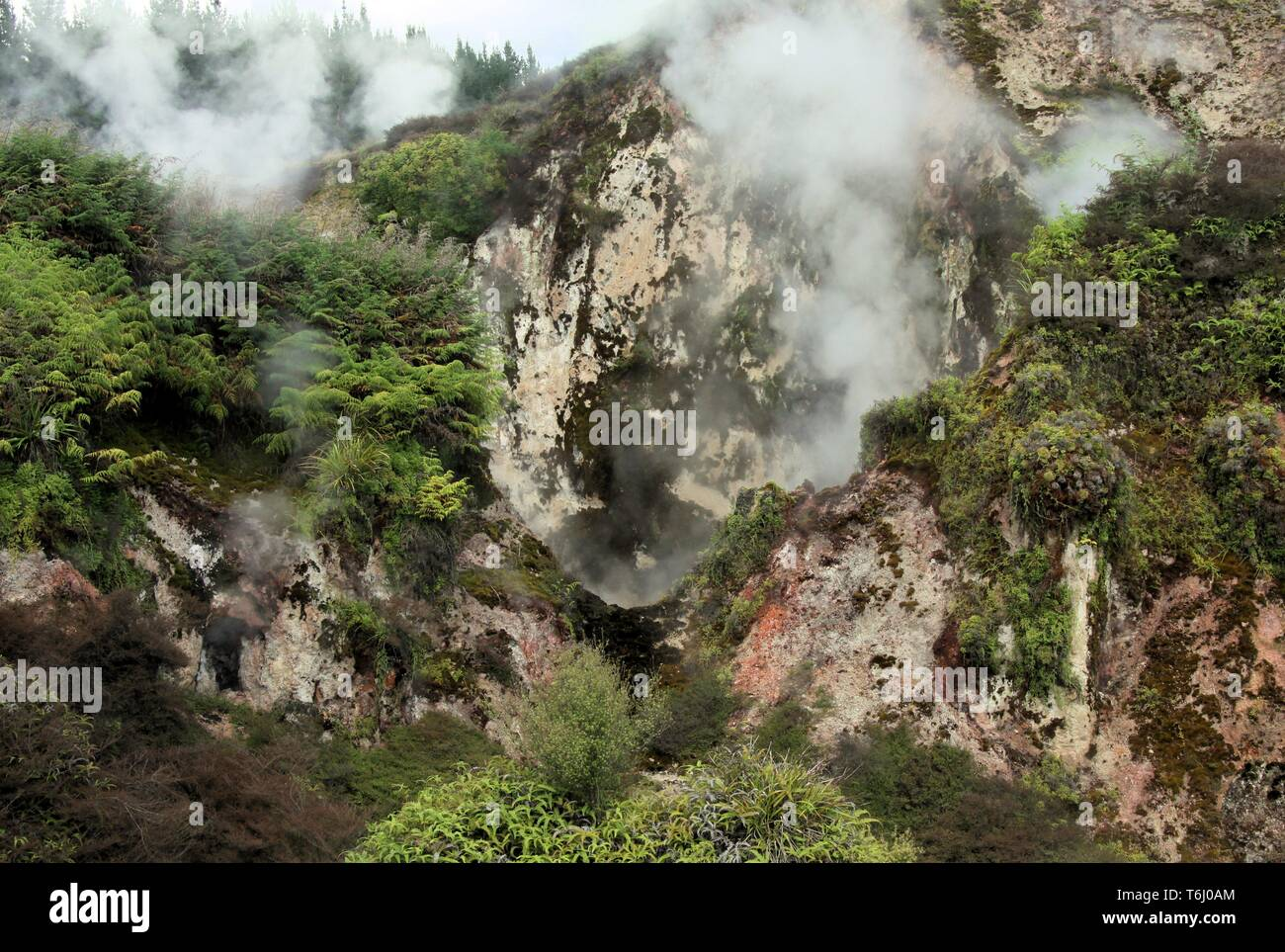 Orakei Korako hidden geothermal valley: View on steaming rocks (Fumaroles) Stock Photo