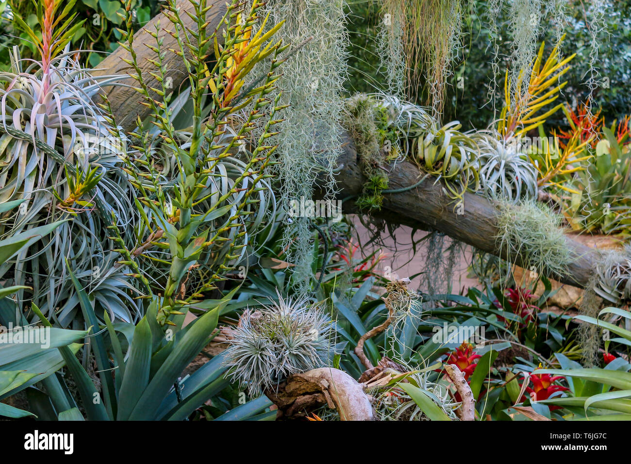 Wild exotic jungle plants. Shallow depth of field background - Stock Image