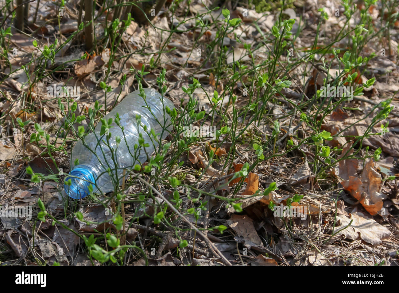 A carelessly throw away plastic water bottle nestled in the foliage litters a forest path - Stock Image
