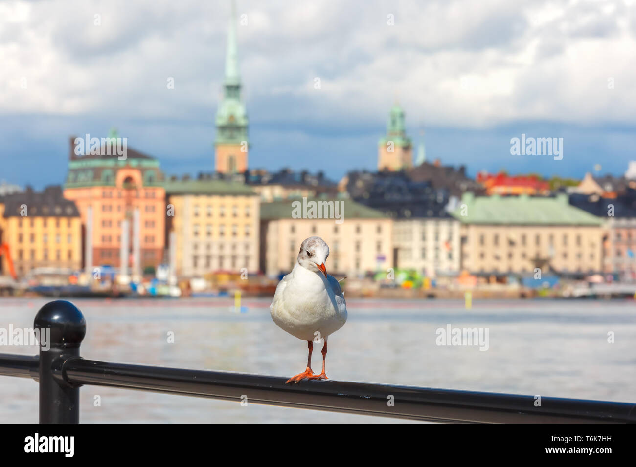 Seagull in Stockholm, Sweden Stock Photo