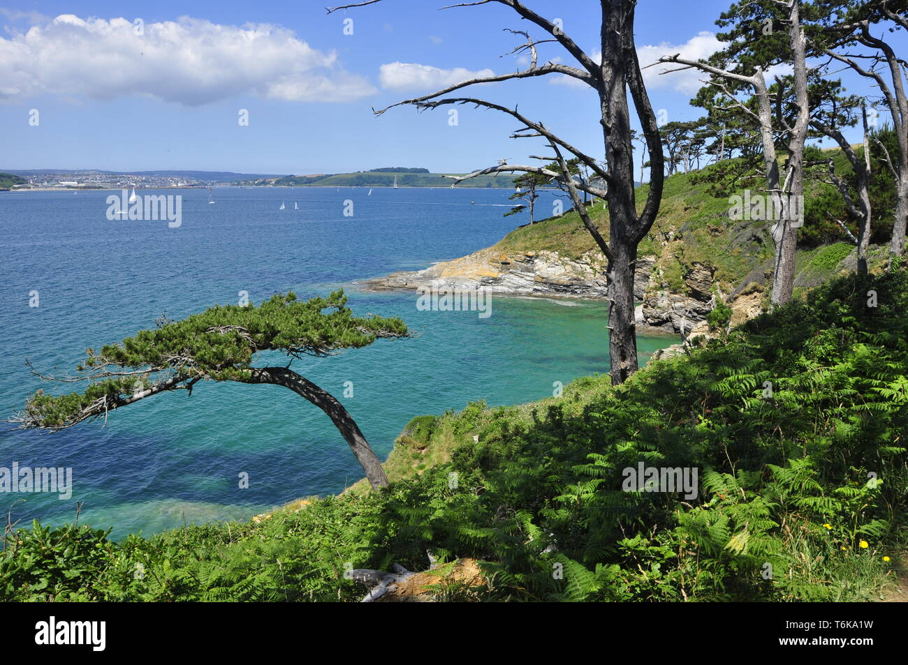 View across Carrick Roads on a beautiful summers day to Falmouth from the coastal path near St Anthony Head, Cornwall,England,UK - Stock Image
