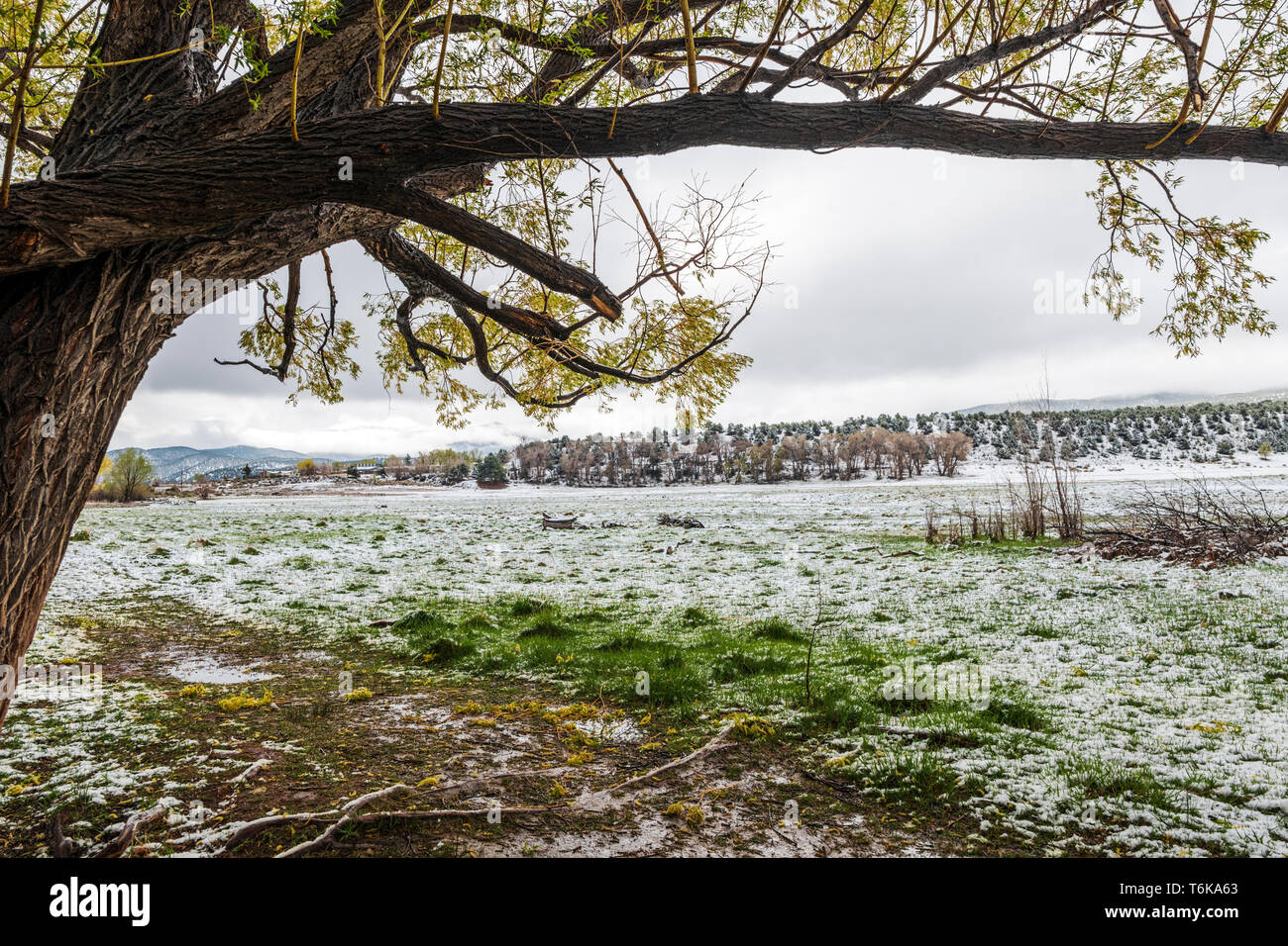 Ranch pasture dusted with fresh springtime snow; central Colorado; USA - Stock Image