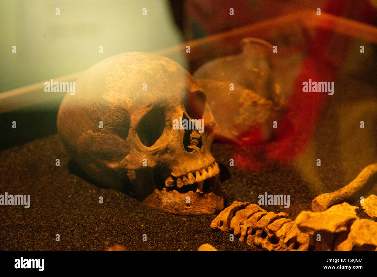 Human skull at the Roman Dead exhibition at the Museum of London Docklands. - Stock Image