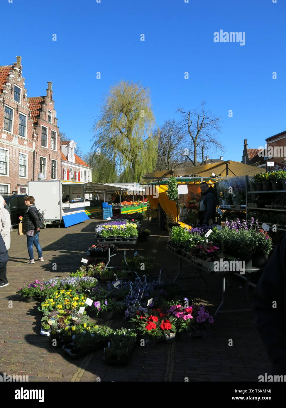 View of a flower stall at the Wednesday morning market in the pretty tourist town of Edam, North Holland; April 2019 - Stock Image