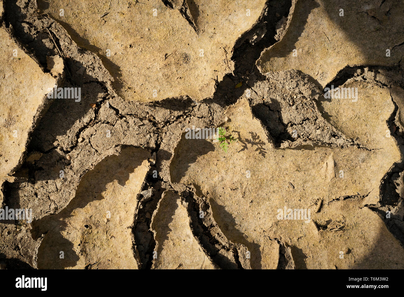 In the harsh landscape of a dried up mud puddle, one small plant survives. With God all things are possible. - Stock Image