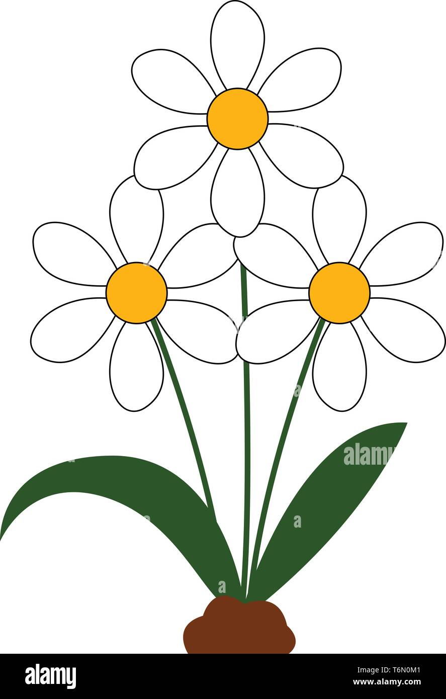 A beautiful bunch of daisies flowers in white color with green leaves vector color drawing or illustration - Stock Vector