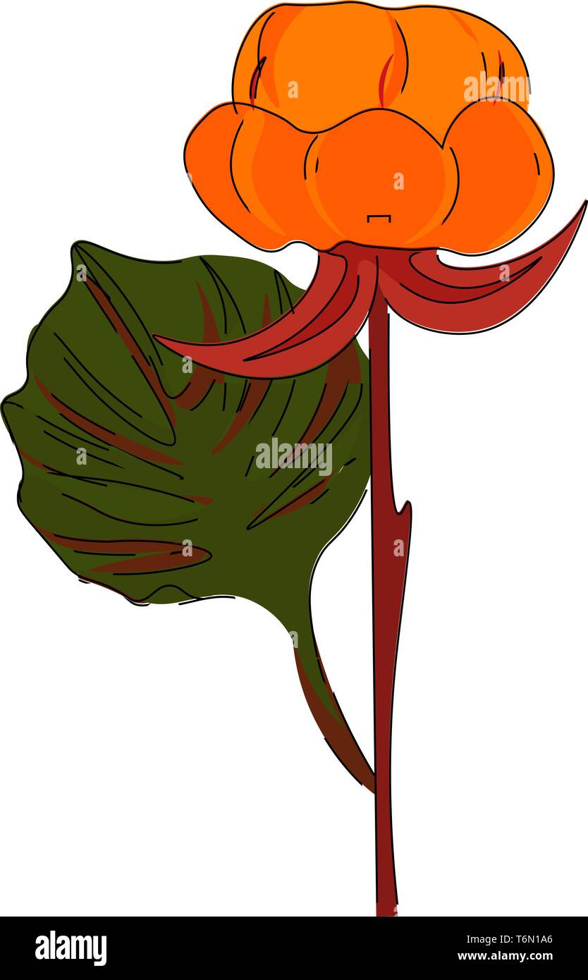 Nordic berry flower in pale red color with a leaf having handlike lobes on a straight  branchless brown stalk  vector  color drawing or illustration - Stock Image
