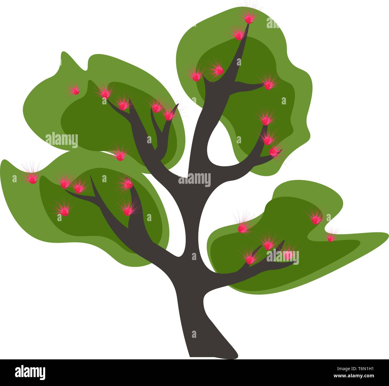 Acacia Tree Stock Vector Images Alamy