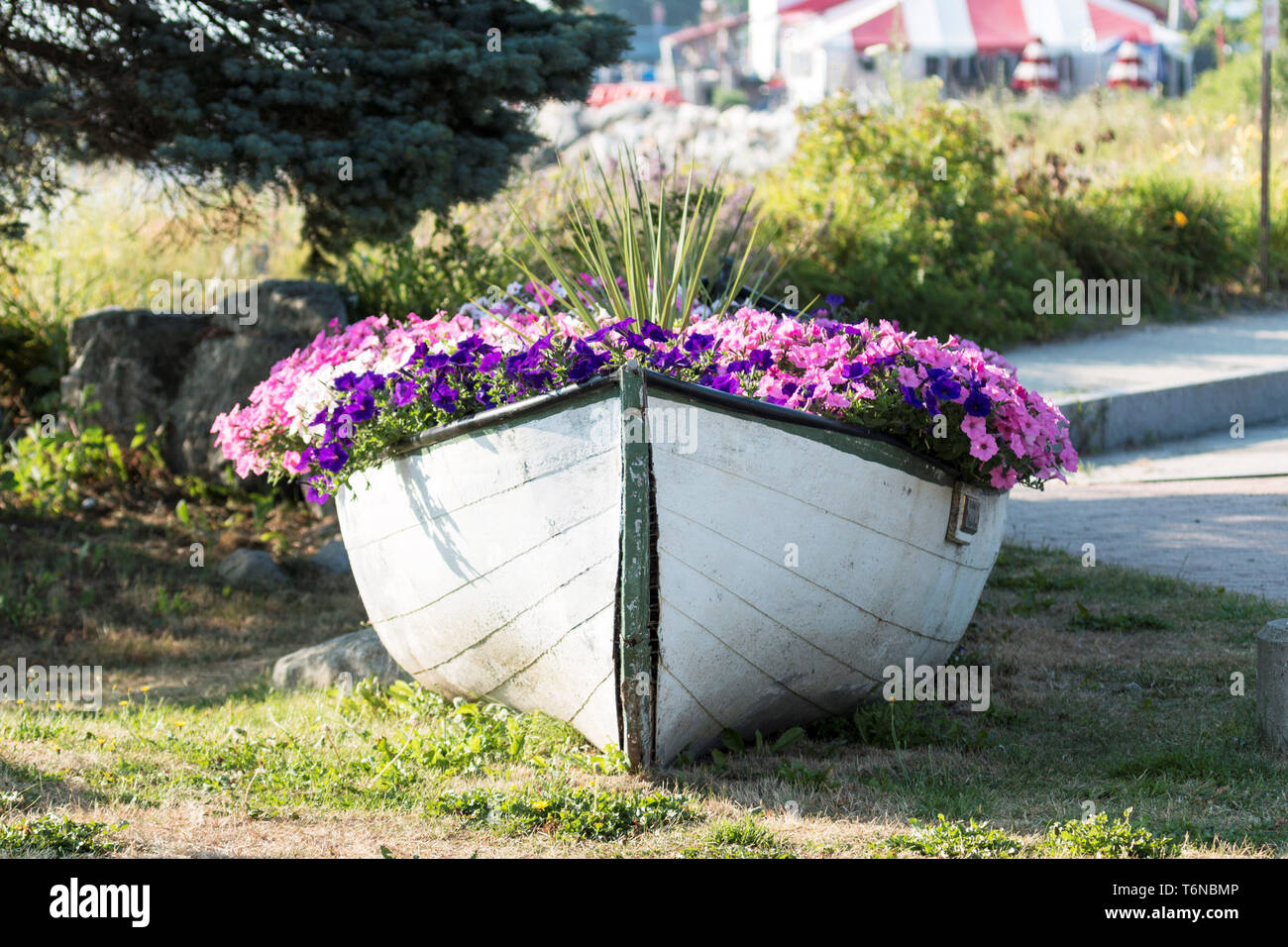 A green and white wooden boat is used to house a garden of flowers on the side of the road in Lincolnville Beach Maine. Stock Photo