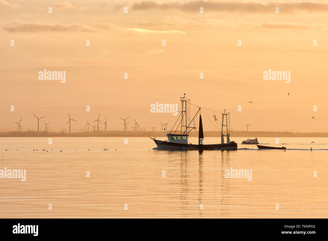 Sunset over Dutch sea with fishing ship returning to harbor - Stock Image