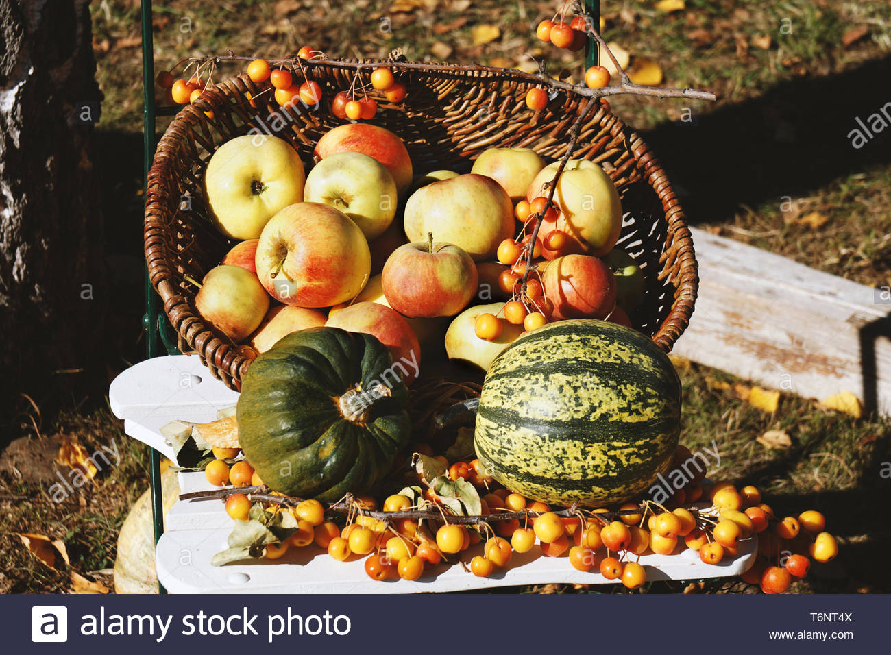 organic apples and pumpkins in basket autumn themed still life Stock Photo