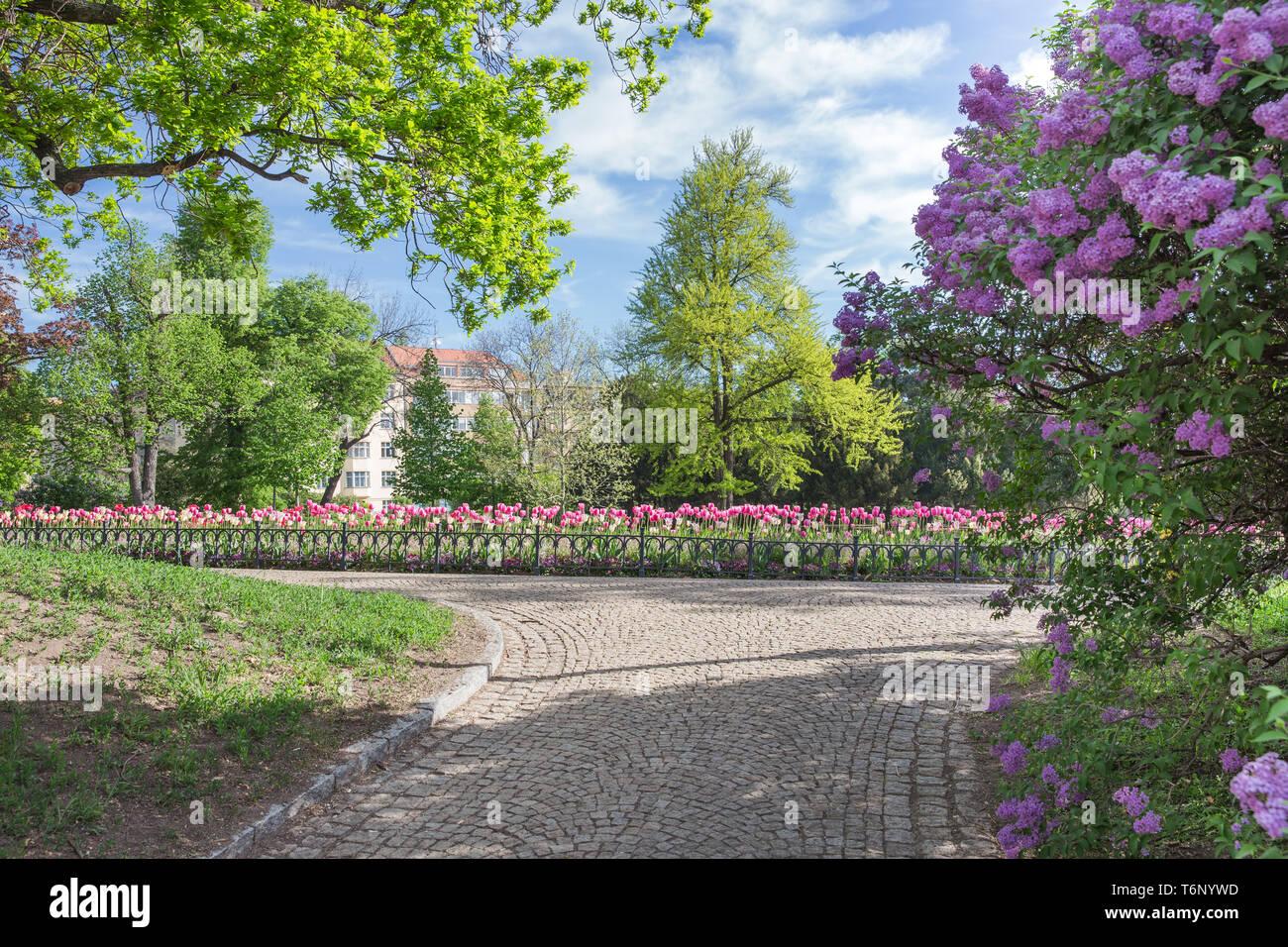 City Prague, Czech Republic. Prague center, flowering park. 2019. 26. April. Travel photo. - Stock Image