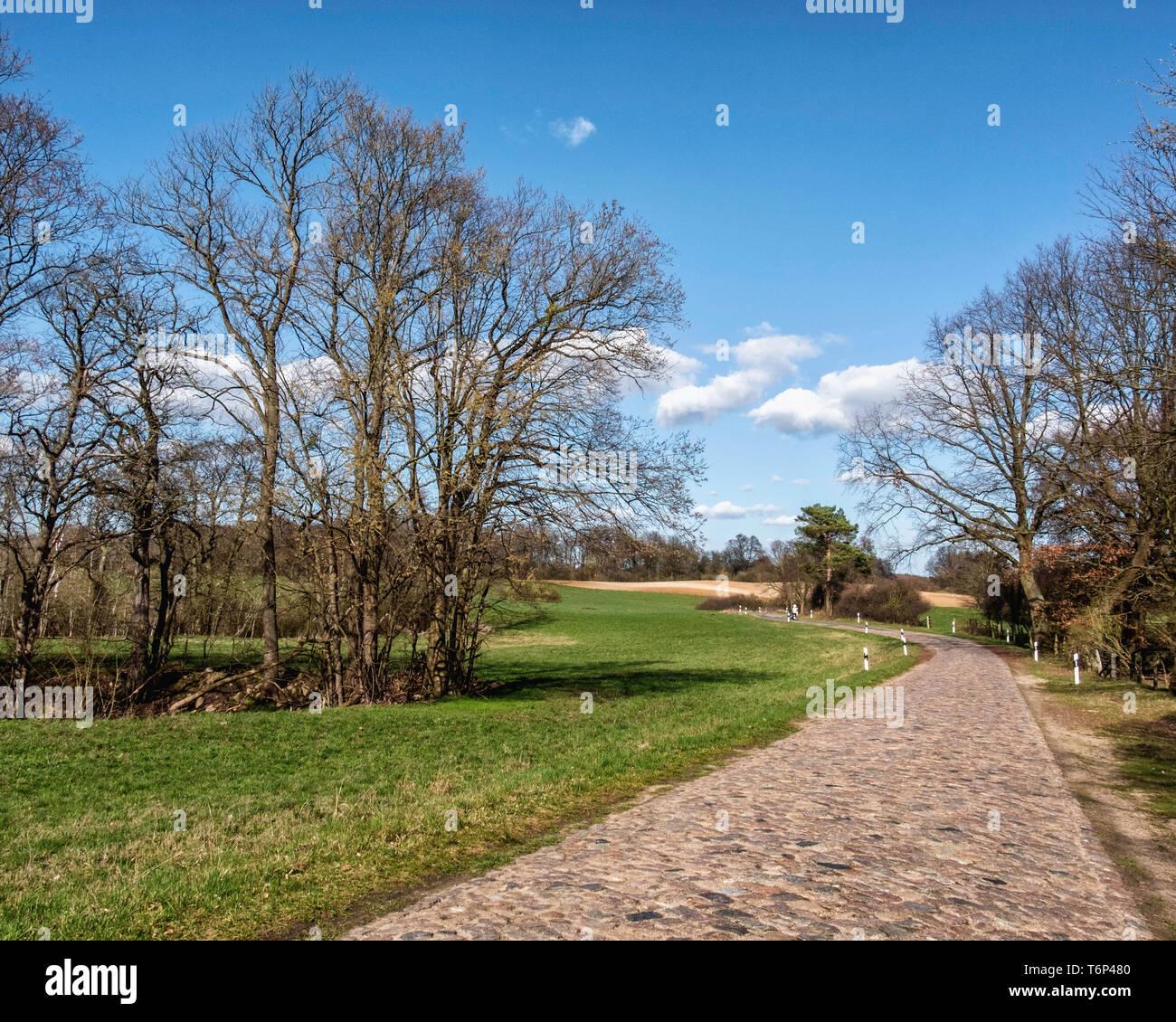 Grassy meadows & bare trees next to Luisenhof cobbled road, Brandenburg, Germany - Stock Image