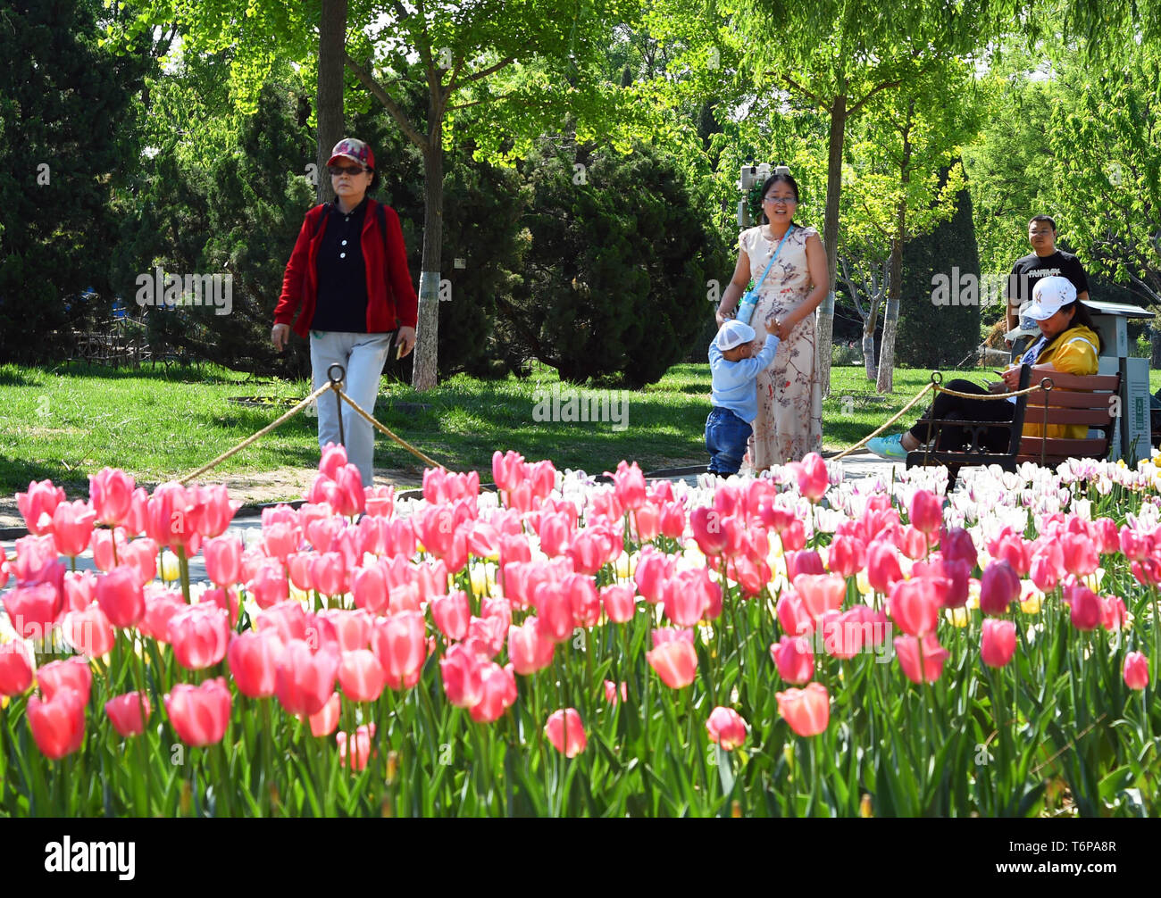 Beijing China 2nd May 2019 Visitors Are Seen In Beijing Garden
