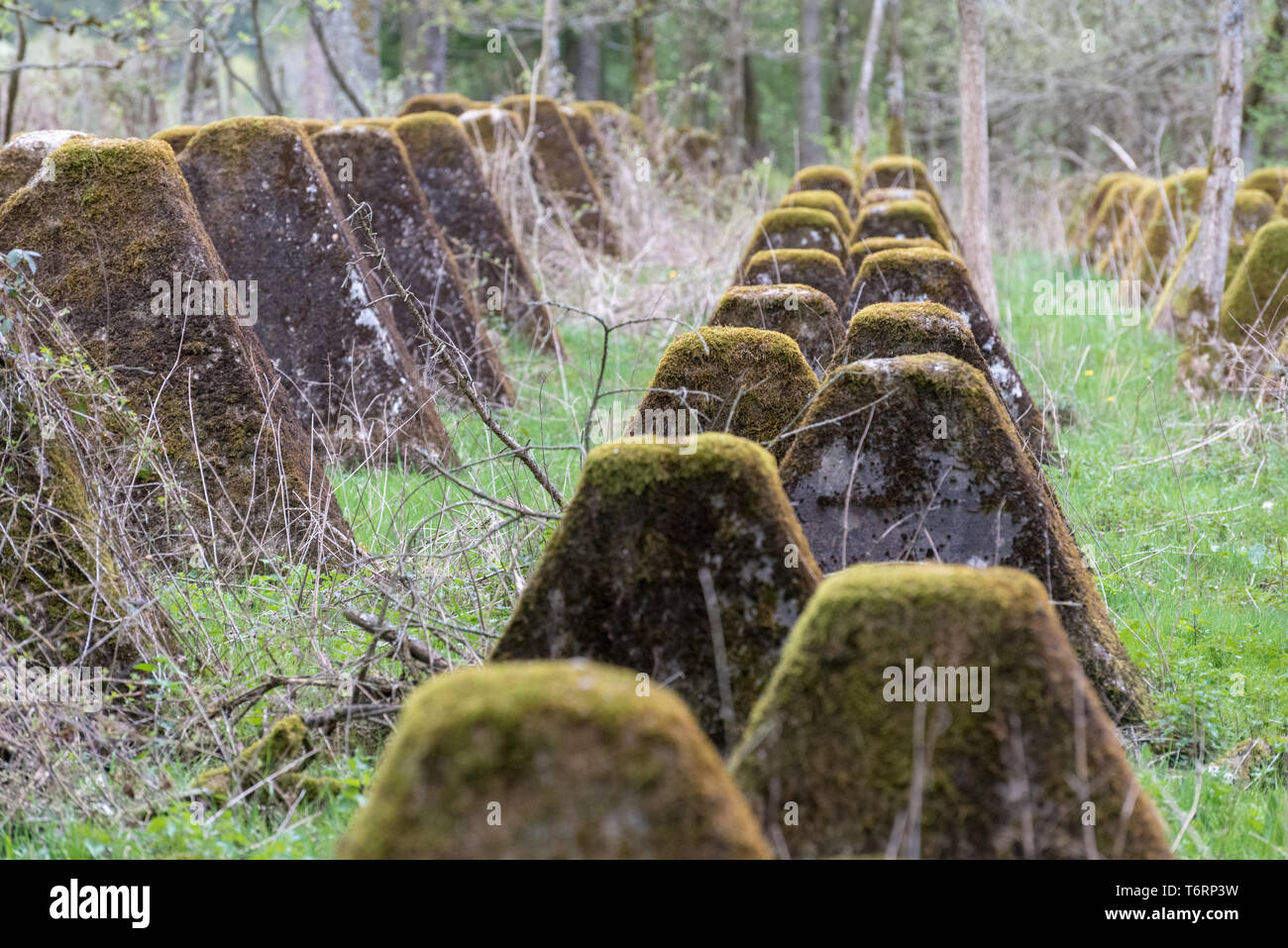 Dragon's teeth tank obstacles in the Siegfried Line at Hollerath, Germany - Stock Image