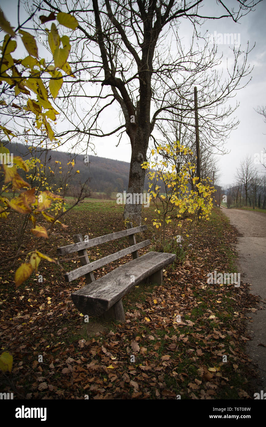 Wooden bench between autumnal trees; upright format - Stock Image