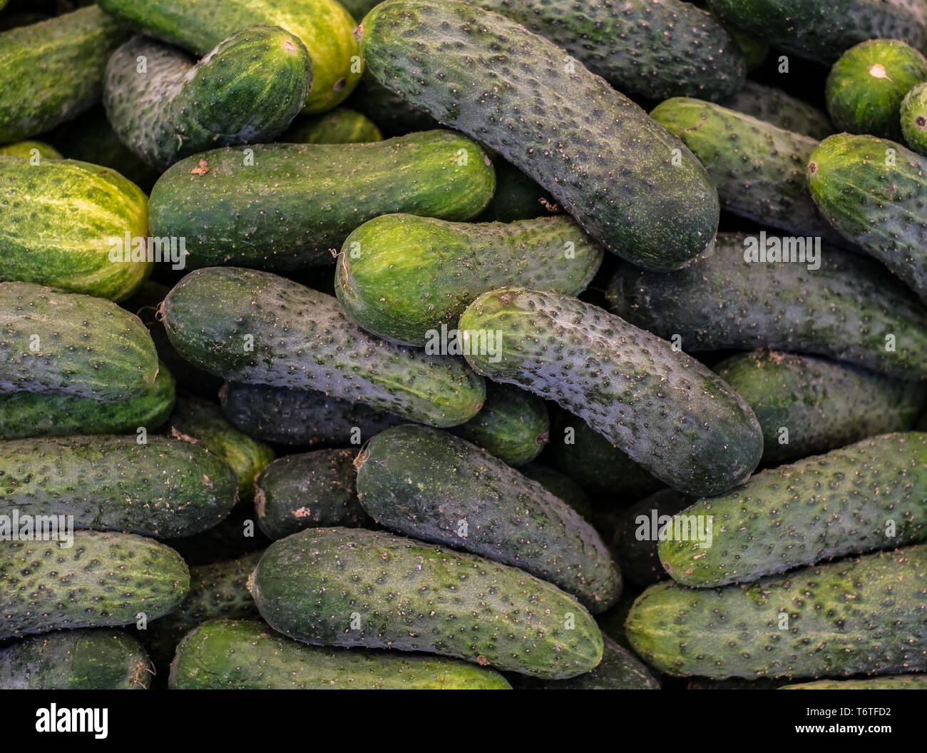 cucumbers at the market stall - Stock Image