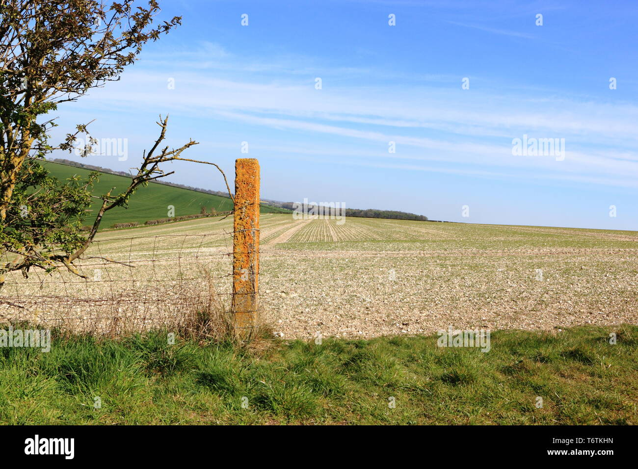 A lichen covered fence post in the scenic farming landscape of the Yorkshire wolds in springtime - Stock Image