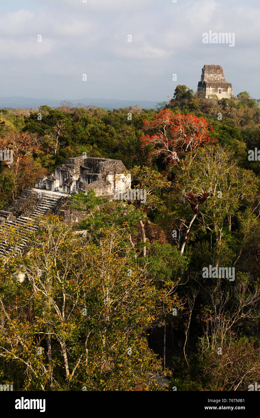 Tikal Guatemala, view of Temple VI from the top of the Mundo Perdido pyramid, Tikal National Park, Tikal, Guatemala Central America - Stock Image