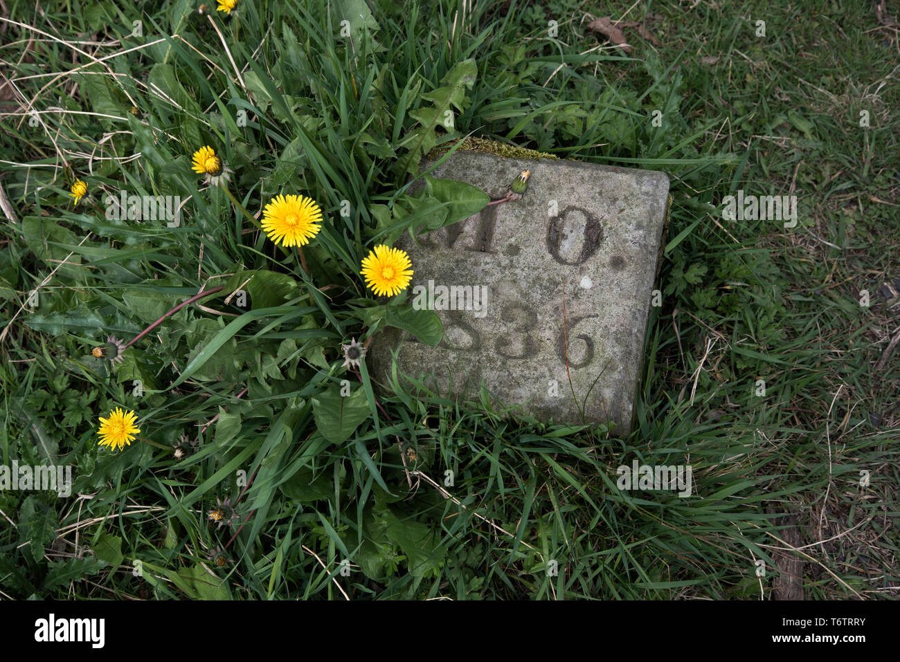 Grave or lair marker with the initials M O and dated 1836 in Greyfriars Kirkyard, Edinburgh, Scotland, UK. - Stock Image