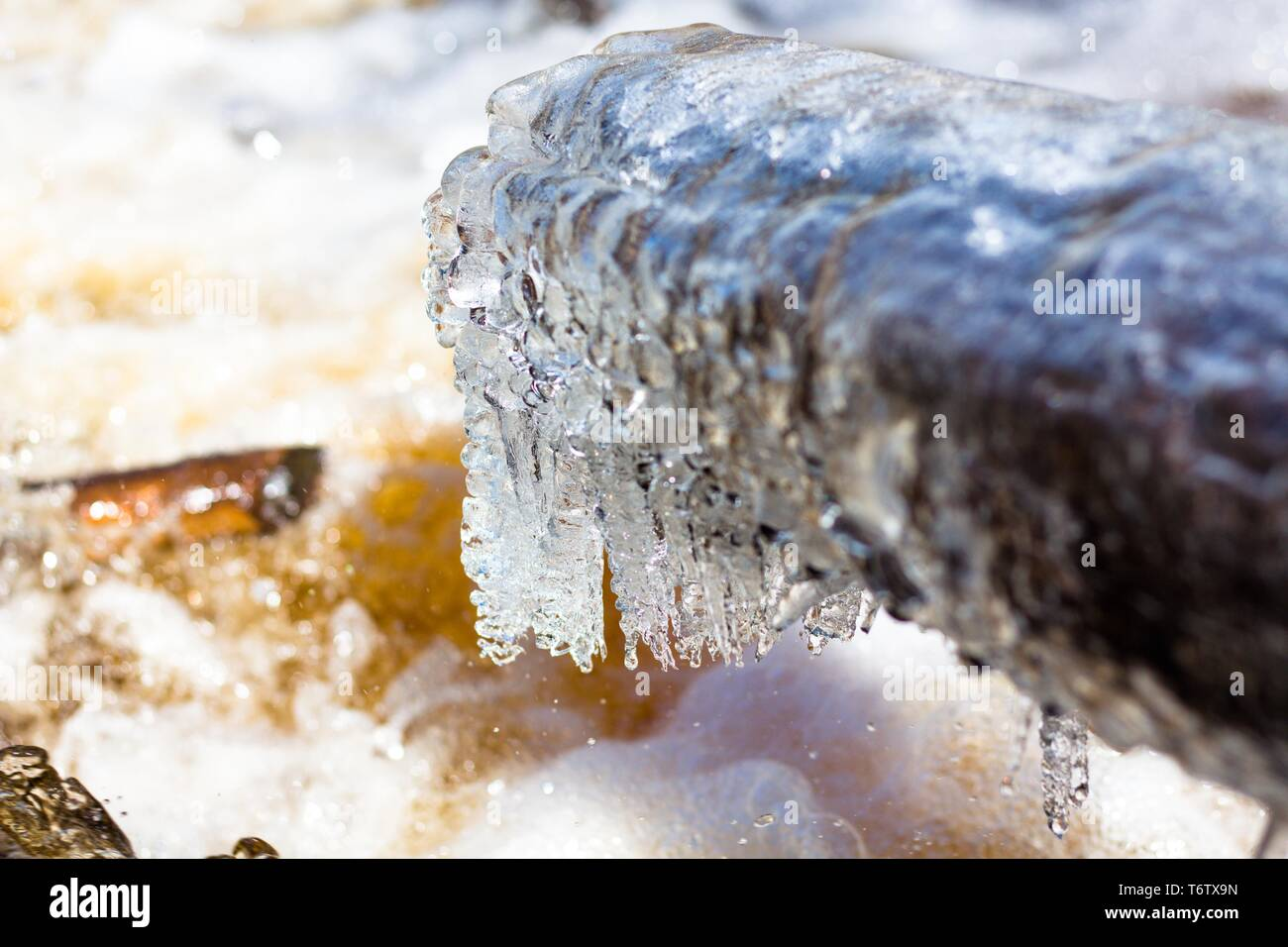 A large fallen tree is covered with a layer of ice. A log is above the current river. The bright and warm sun warms and the ice melts. Drops fall into - Stock Image
