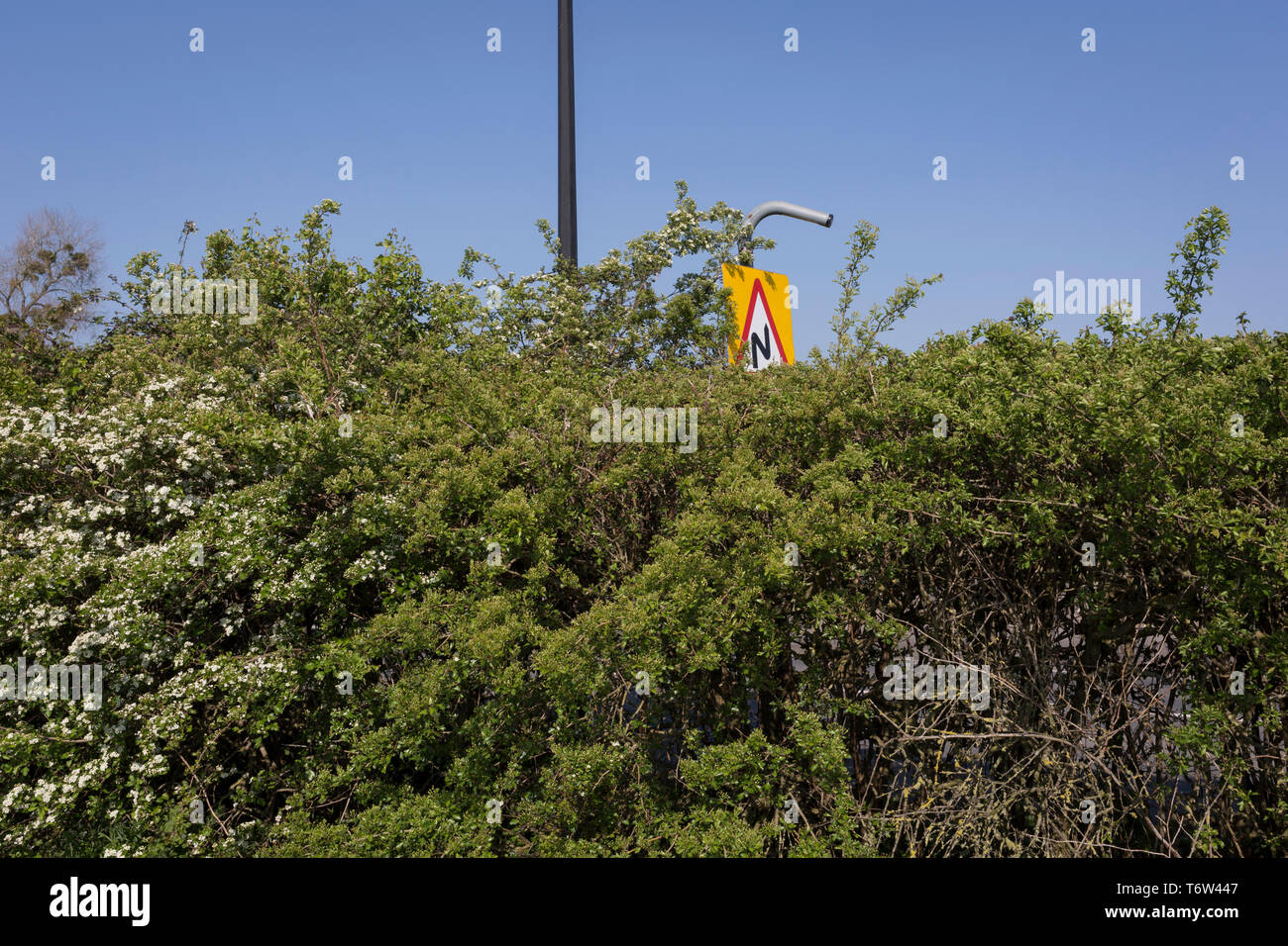 A triangular warning sign for Double Bend seen over the hedgerow of a car park in Nailsea, on 21st April 2019, in Nailsea, North Somerset, England - Stock Image